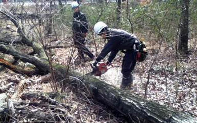 Timber from Forest Thinning